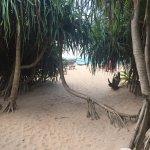 Photo of Jungle Beach