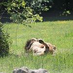 Photo of Le Parc des Felins