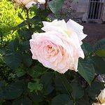 Les roses ont éclos pour notre plus grand bonheur ...