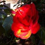 Découvrez notre jardin aux 1000 senteurs et couleurs