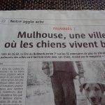 les chiens sont les bienvenus à Mulhouse et à l' hôtel Salvator :)