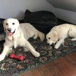Nuestro perro y Duna caben perfectamente en el hueco de la buhardilla