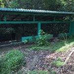 Foto de Semenggoh Nature Reserve