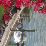 La famiglia di cigni nel parco dell'hotel è cresciuta