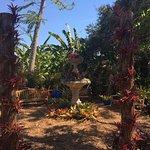 Foto de Marie Selby Botanical Gardens