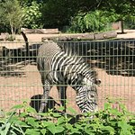 Photo of Koelner Zoo