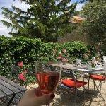 Photo de l'acacia en provence