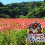 Photo of Kurihama Flower Land