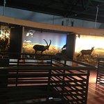 Экспозиция местных животных