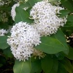 Photo of Botanic Garden Meise