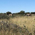 Mafikeng Game Reserve-billede