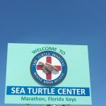 Photo of The Turtle Hospital