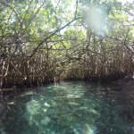 floating though the mangroves in xcaret at the mayan river underground