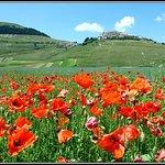 Castelluccio di Norcia - la fiorita