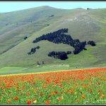 Castelluccio di Norcia - Italia in fiore