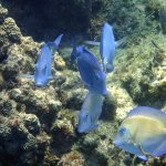 There are huge groups of the Tangs around, year after year.