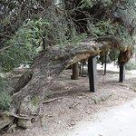Photo de Orto Botanico di Palermo