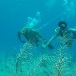 Foto de Aquaman Virgin Islands