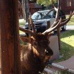 Foto di Rams Horn Village Resort
