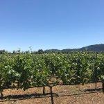 Robert Mondavi Winery