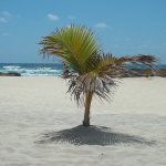 my palm tree....for the day lol