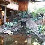 The pond at Duke's