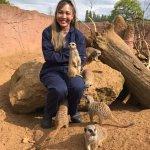 Meerkats encounter
