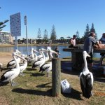 Close encounter with the friendly pelicans when the catch is cleaned