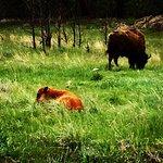 Foto di Custer State Park