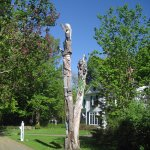 Chainsaw carvings on dead tree