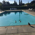 Pool with family of ducks!