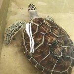 Foto de Tortugranja (Turtle Farm)