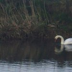I could see swans from my room!