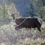 Foto di Wildlife Expeditions of Teton Science Schools