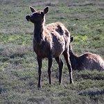 Wildlife Expeditions of Teton Science Schools Foto