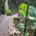 """Longer but Less steep"" path to La Mina Falls"