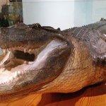 Foto de Bayou Terrebonne Waterlife Museum