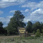 Photo of Coconino National Forest