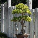 Bonsai in the Japanese Garden