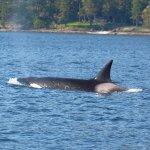 Foto di Maya's Legacy Whale Watching