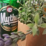 Greek Beer - Mythos