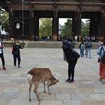 Nara-Park Foto