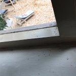 Full of ants
