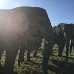 Photo de Knysna Elephant Park