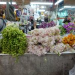 Different colors of flowers