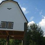 Foto di University of Florida Bat House