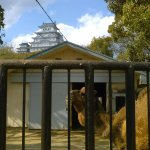Photo of Himeji City Zoo