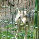 Photo of Wolfcenter