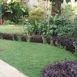 Nicely arrange garden for hotel Guest