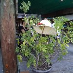 This potted plant served as a perfect hat rack!